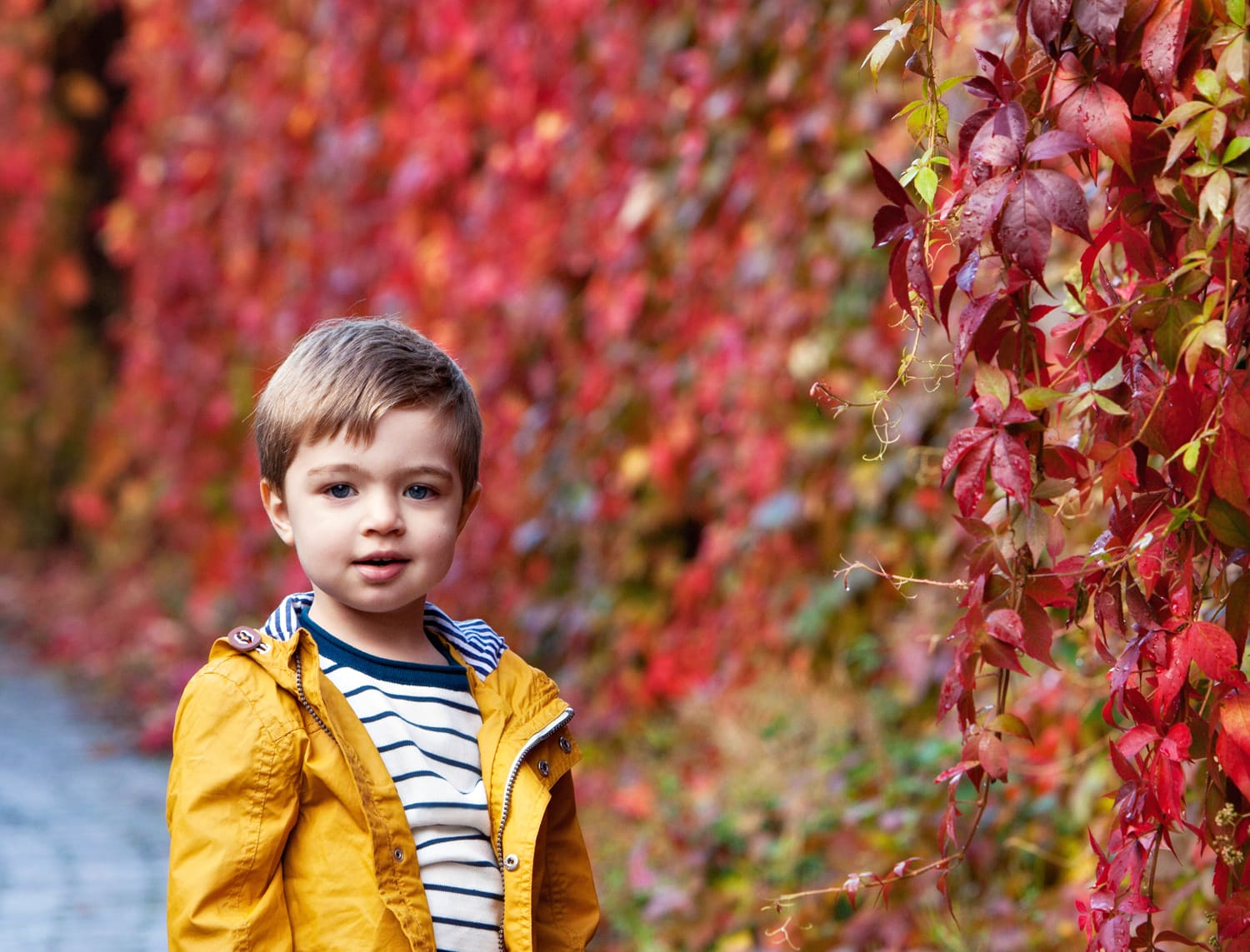 Autumn Leaves image of a little boy in Norton wearing a yellow raincoat against red leaves