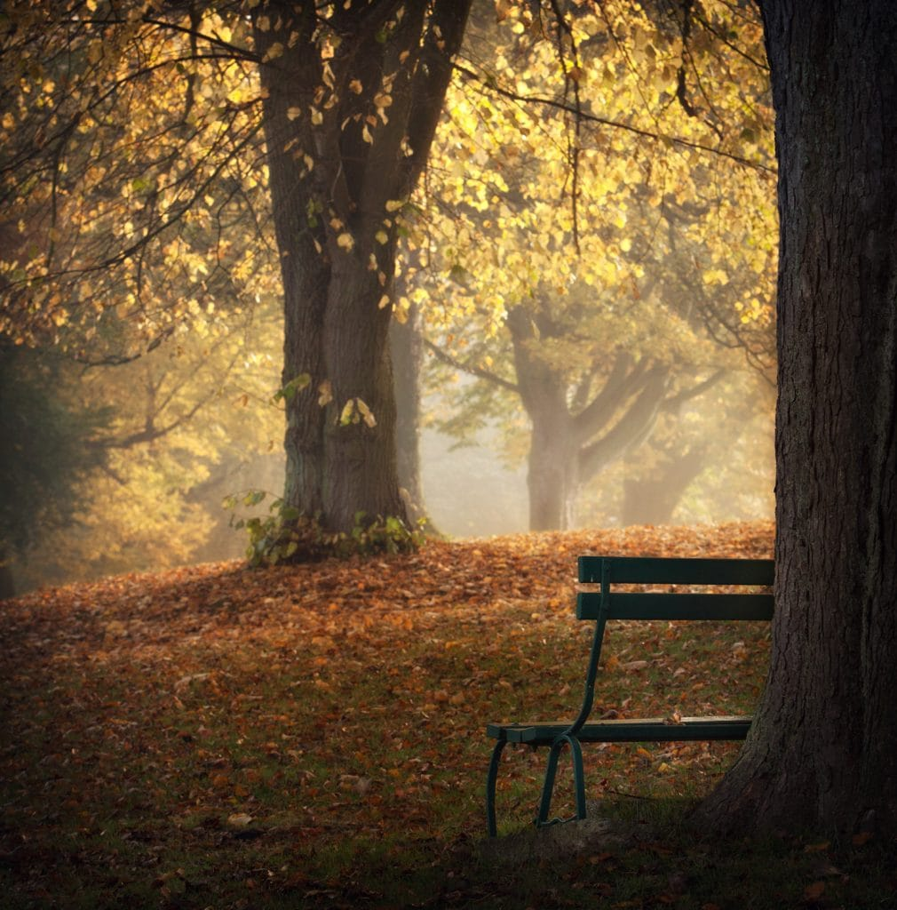 Autumn Scene at Hutton Rudby bench with autumn trees