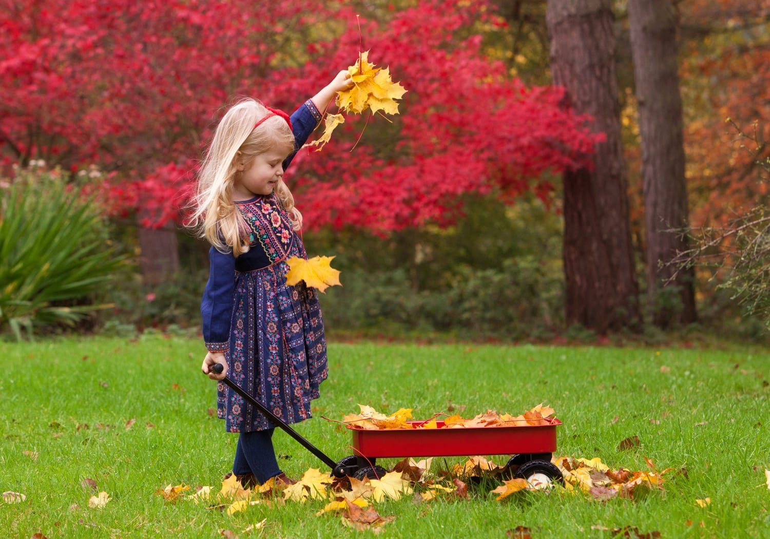 little girl dropping Autumn leaves into a truck at Wynyard Hall