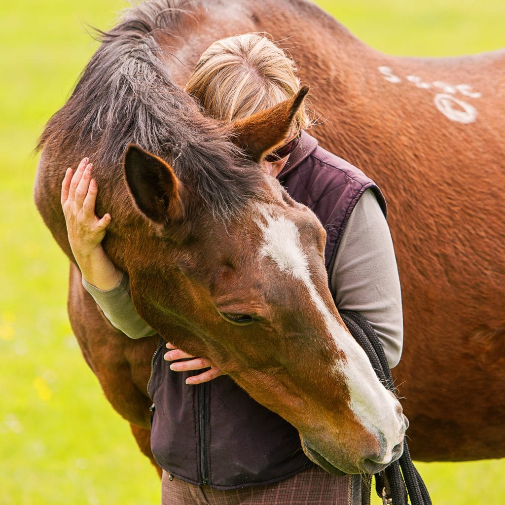 owners love their horses