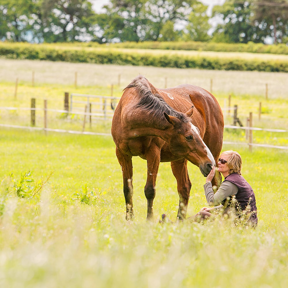 Horse and owner in a field, taken with a long lens